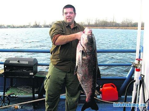 толстолобик водится в черном море
