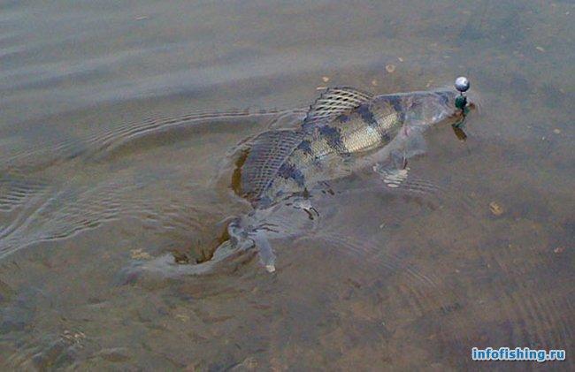 Как ловить рыбу на джиг?