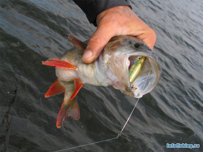 Ловить рыбу в мае
