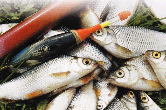 рыбалка весной на поплавок на оке