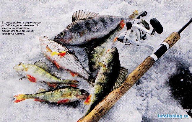 Общество рыболовов и охотников богородск