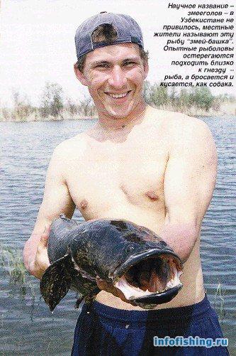 как ловить сома в узбекистане
